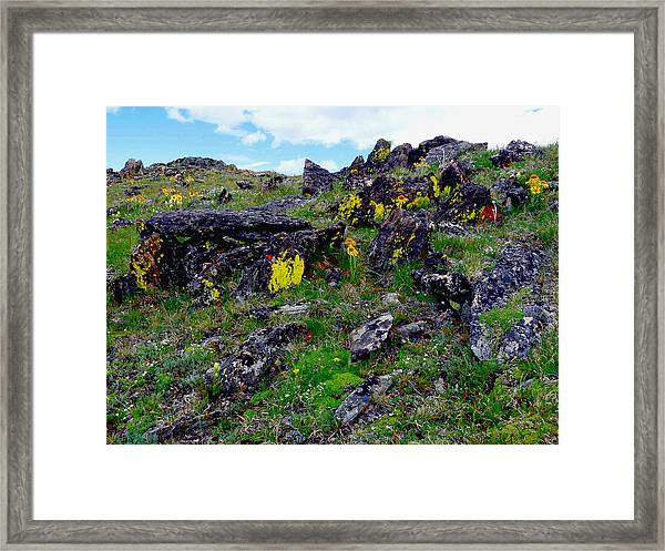 Tundra Yellows Framed Print