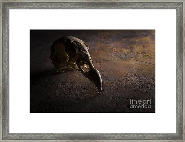 Turkey Vulture Skull On Slate Framed Print