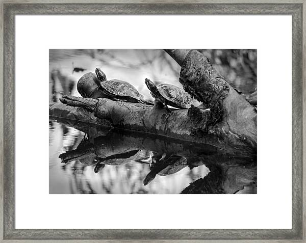 Turtle Bffs Bw By Denise Dube Framed Print