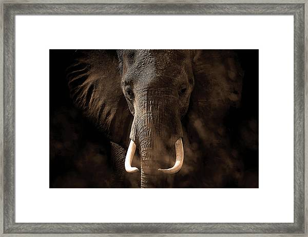 Tusker Framed Print by Bjorn Persson