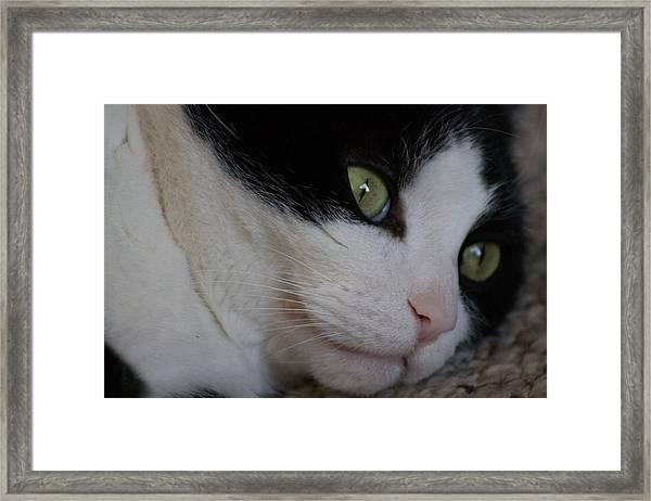Tux Framed Print by Rhonda Humphreys