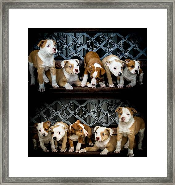 Twice The Love Framed Print