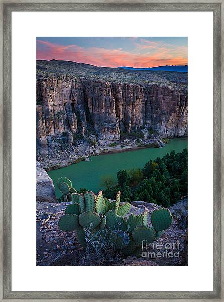 Twilight Cactus Framed Print