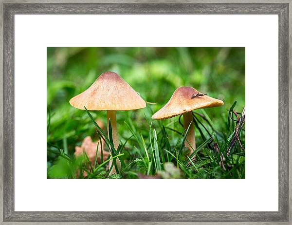 Twin Toadstools. Framed Print