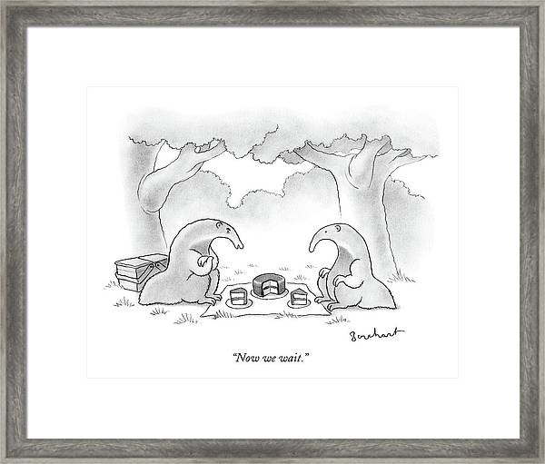 Two Anteaters On A Picnic Wait For Ants To Come Framed Print