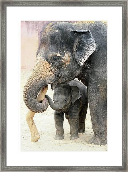 Two Framed Print