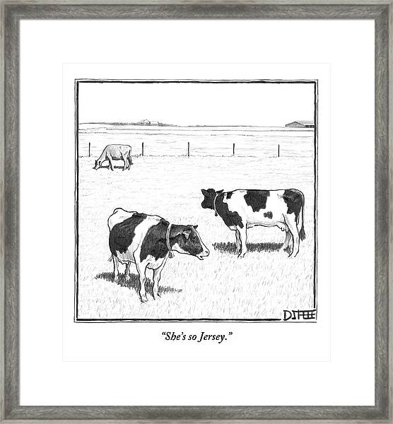 Two Spotted Cows Looking At A Jersey Cow Framed Print