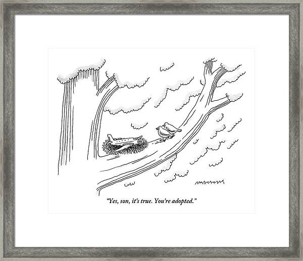 Two Birds On A Tree Branch Speak To A Small Plane Framed Print