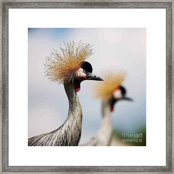 Two Black Crowned Cranes Framed Print