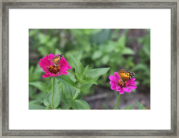 Two Busy Framed Print