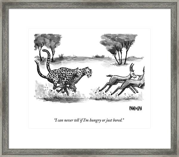 Two Cheetahs Chase Antelopes Framed Print by Corey Pandolph