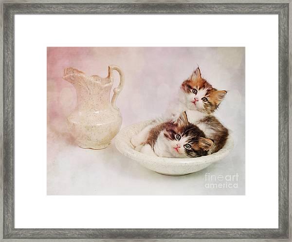 Two Clean Kittens  Framed Print