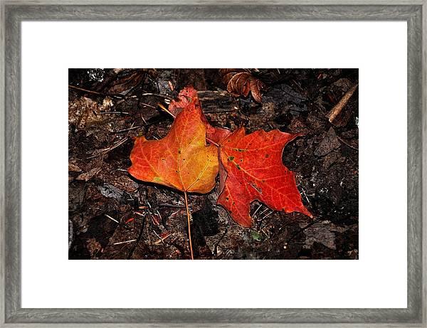 Two Fallen Autumn Leaves Framed Print