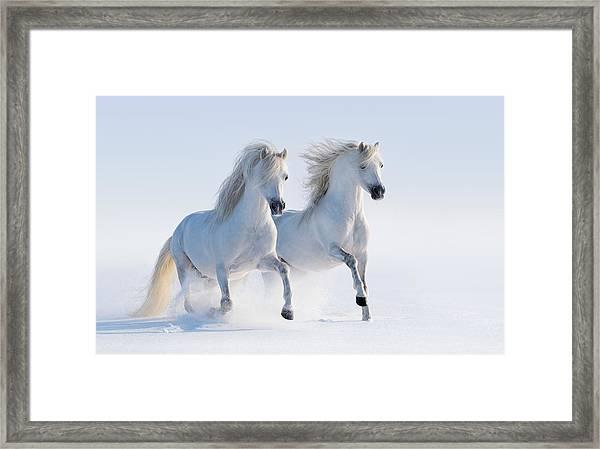 Two Galloping Snow-white Horses Framed Print by Abramova_Kseniya