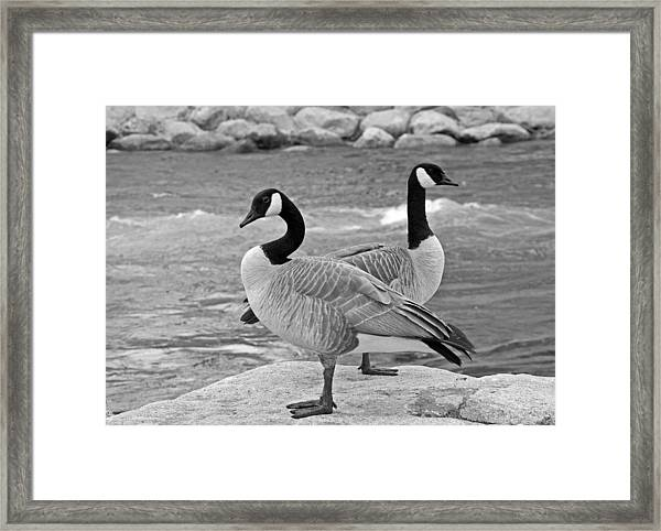 Two Geese In Black And White Framed Print