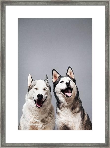 Two Happy Husky Dogs Framed Print by Ilka & Franz