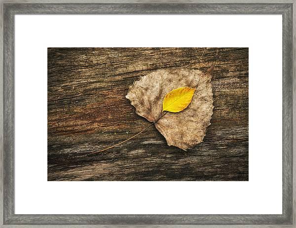 Two Leaves  Framed Print