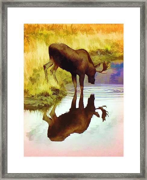 Two Moose  Framed Print