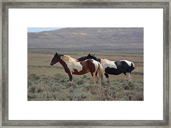 Two Mustangs In Wyoming Framed Print