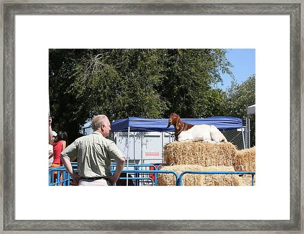 Two Old Goats Framed Print