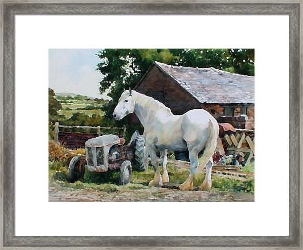 Two Old Grays Framed Print