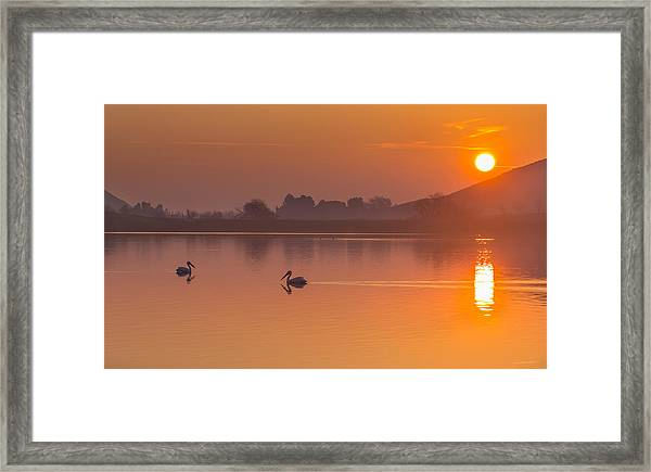 Two Pelicans At Sunrise Framed Print