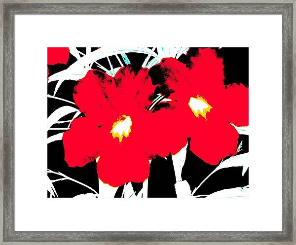 Two Red Jack Flowers Framed Print