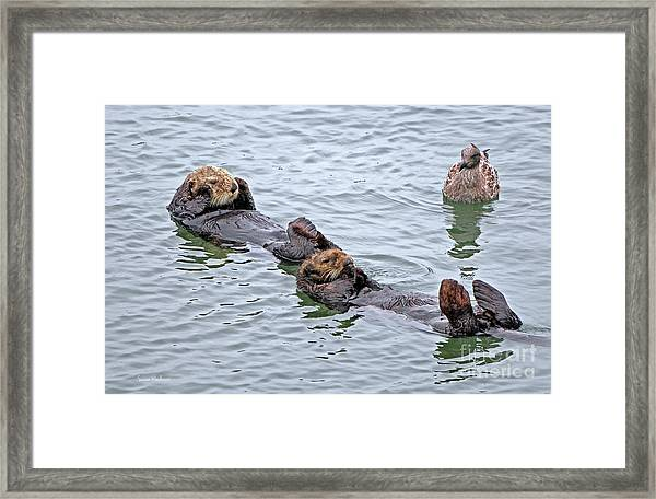 Two Sea Otters And A Gull Framed Print
