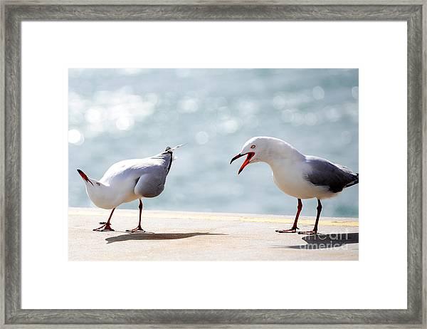 Two Seagulls Framed Print