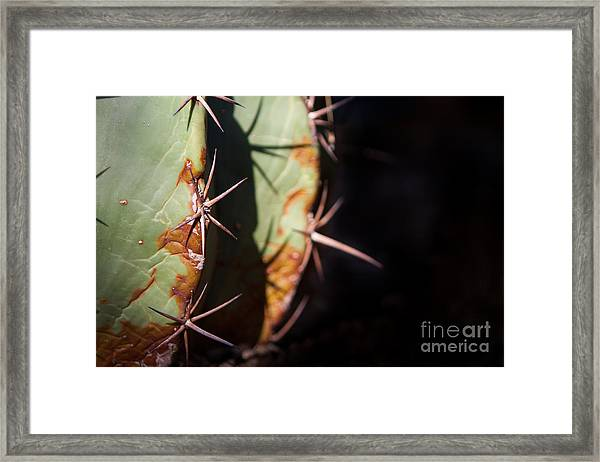 Two Shades Of Cactus Framed Print