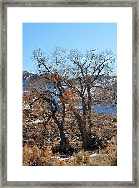 Two Trees In The Mountains Framed Print