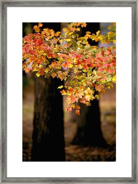 Two Trees Framed Print