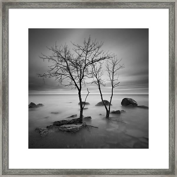 Two Trees Walking Framed Print