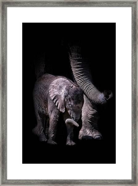 Two Trunks Framed Print