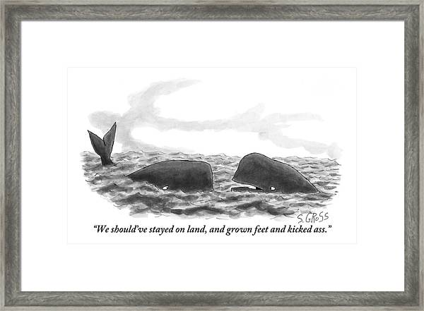 Two Whales Are Seen In Water In Conversation Framed Print
