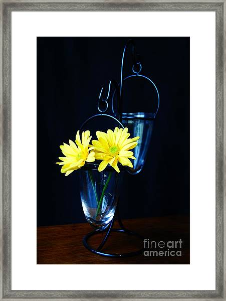 Two Yellow Daisies Framed Print