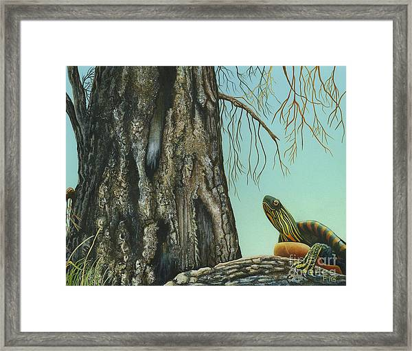 Tyler And The Tree Framed Print