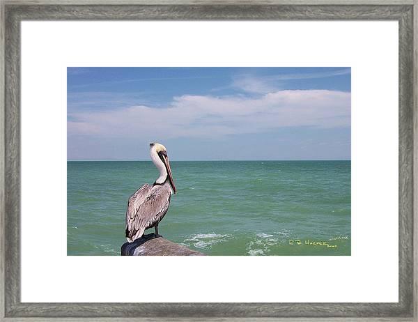 Ubiquitous Pelican Framed Print