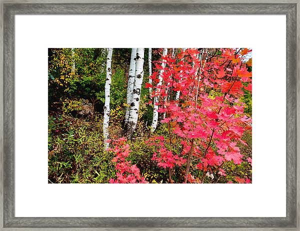 Uinta Colors Framed Print