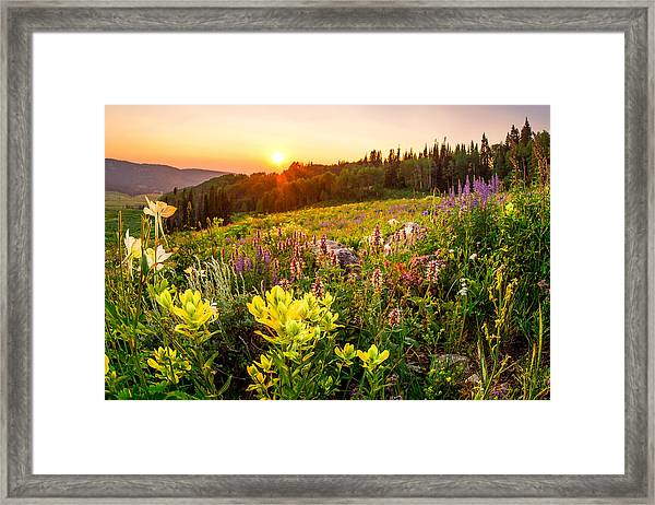 Uinta Wildflowers Framed Print