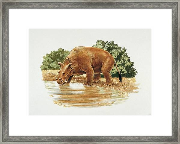 Uintatherium Framed Print by Deagostini/uig/science Photo Library