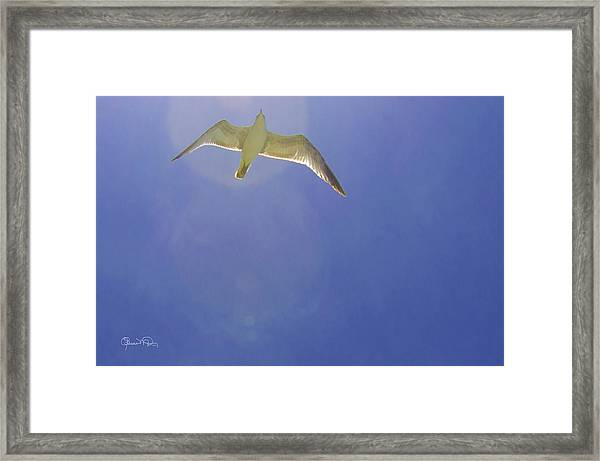 Under His Wings II Framed Print