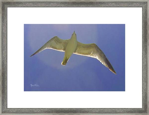 Under His Wings IIi Framed Print
