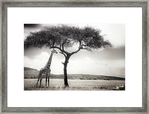 Under The African Sun Framed Print