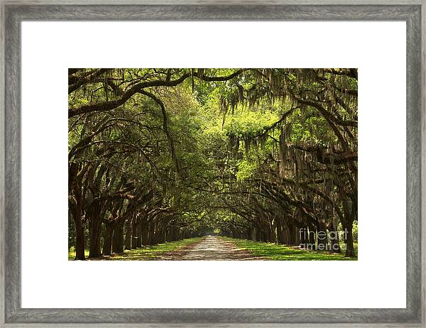 Under The Ancient Oaks Framed Print