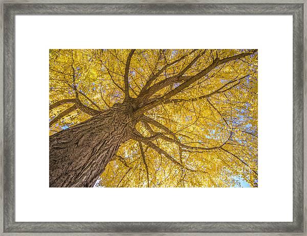 Under The Autumn Tree Framed Print