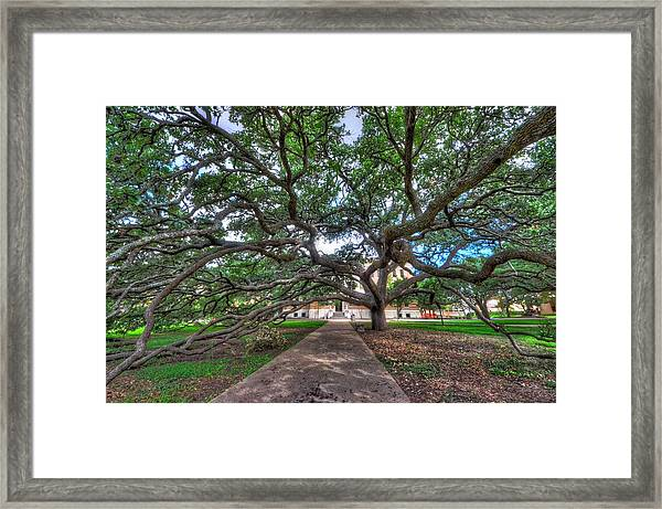 Under The Century Tree Framed Print