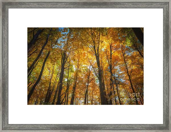 Under The Golden Canopy Framed Print