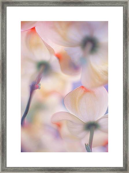 Under The Skirts Of Flowers Framed Print by Francois Casanova