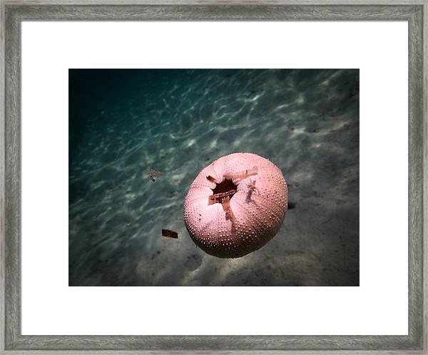 Underwater Ball Framed Print